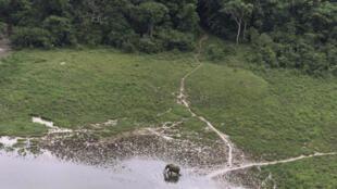 Eléphant dans la réserve forestière de Lope au Gabon (illustration).