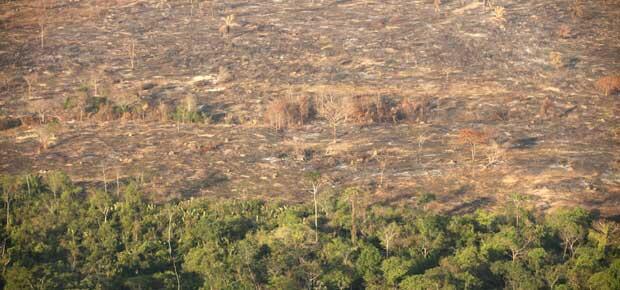 Desmatamento na Amazônia caiu, mas pecuária ainda é responsável por 80% da destruição de florestas.