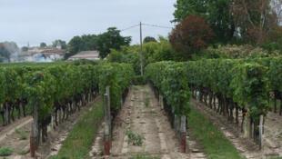 Vineyard Le Bon Pasteur