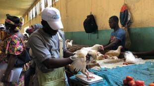 agent-ICASEES-poulet-marche-central-bangui-centrafrique