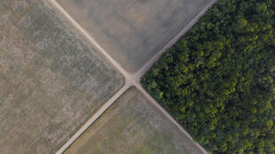 A section of Amazon rainforest stands next to soy fields in Belterra, Para state, Brazil. Like in many parts of the world, species there are disappearing at an alarming rate.