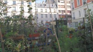 Le jardin partagé de la Goutte verte, 4, rue Cavé, dans le 18e arrondissement de Paris.