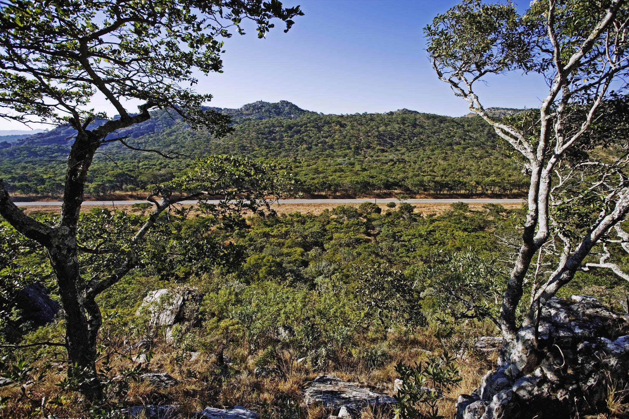 Vue d'une forêt dans la région du Katanga, en RDC.