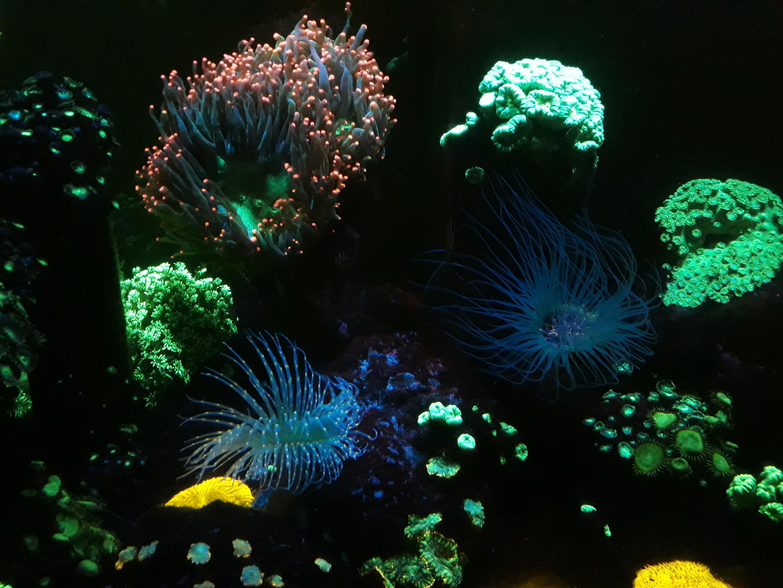 Uno de los acuarios más espectaculares es el de los corales fluorescentes.