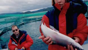 Elevage de saumon norvégien.