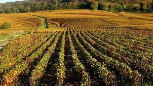 A file photo of champagne vineyards in eastern France.