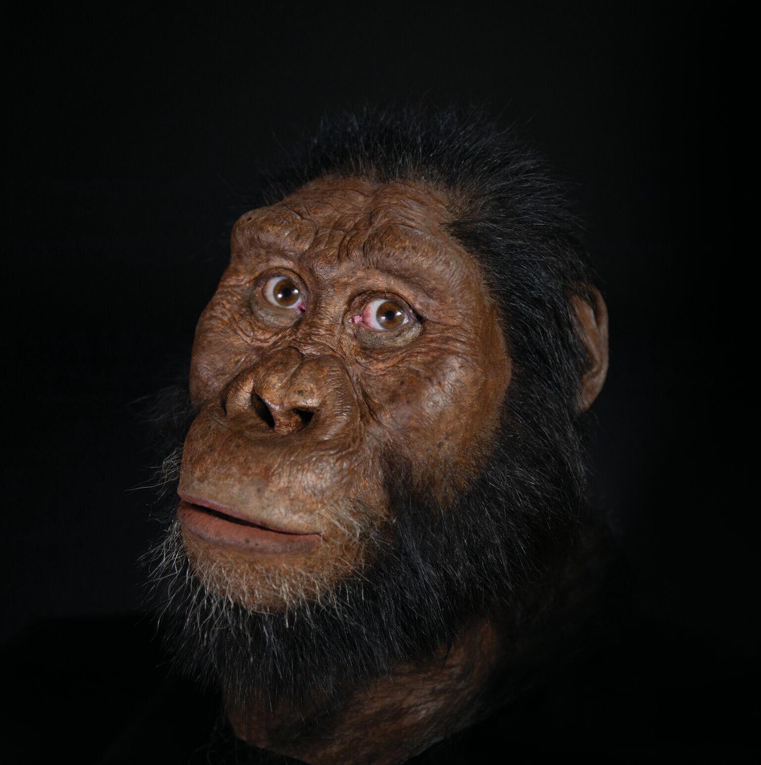 Reproduction faciale grâce au CT scan et au travail du paléoartiste John Gurche.