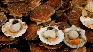 La pêche de coquilles Saint-Jacques est au coeur d'une dispute entre pêcheurs français et anglais.
