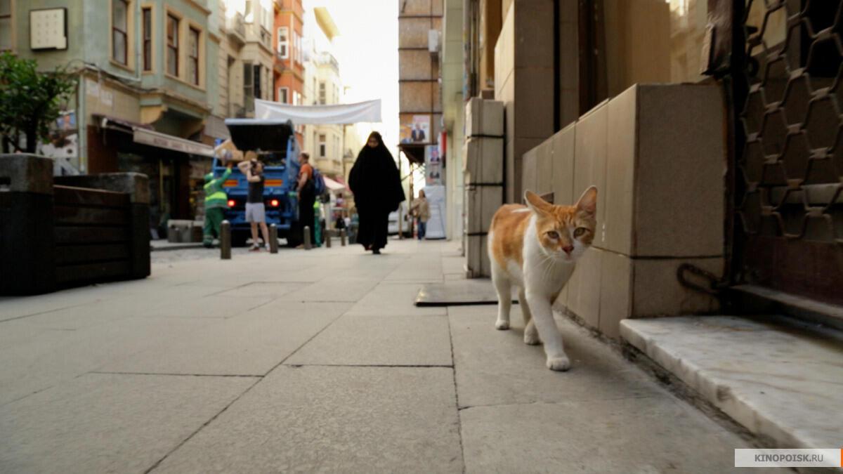 Кадр из документального фильма «Город кошек»