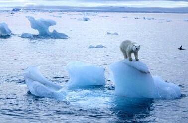 گرم شدن زمین موجب تسریع روند آب شدن یخهای قطبی شده است