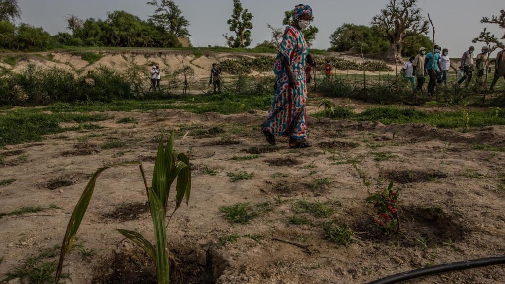 Sénégal: contre la déforestation, le projet de replanter des forêts nourricières