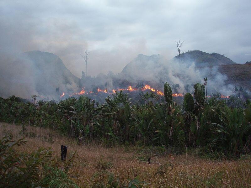Culture sur brulis illégale dans la région de Manantenina à Madagascar en Afrique (image d'illustration).
