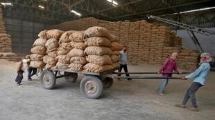 Des ouvriers transportent des sacs de riz dans une usine, à la périphérie d'Ahmedabd en Inde, le 20 avril 2020.