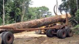 Le problème de la déforestation est souligné par les auteurs de l'étude.
