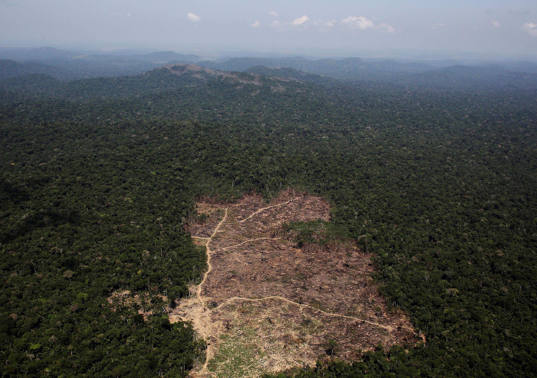 Parcela da Floresta Amazônica desmatada para uso de agricultores.