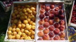 72,6% de las frutas que se consumen en Francia contienen residuos de pesticidas, según Generaciones Futuras.