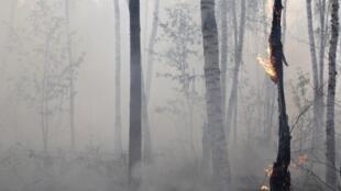 Лесной пожар под Электрогорском в 60 км к востоку от Москвы 3 августа 2010