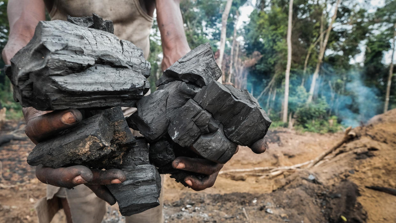 Le makala ou bois énergie est une des sources de déforestation de la forêt autour de Yangambi.