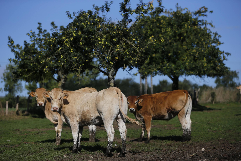 Les éleveurs souffrent de la surproduction de lait et de viande de porc et de boeuf qui plombe les cours.