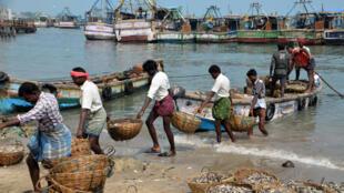 Scène de pêche à Rameswaram dans le Tamil Nadu, au sud de l'Inde.