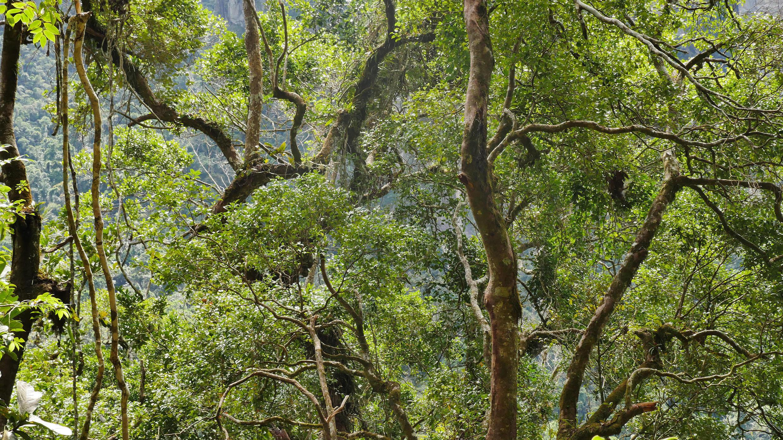 Les départs de feux de forêt ont doublé dans la région Boeny depuis le début de l'année (image d'illustration)