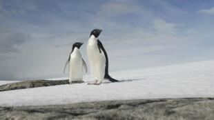 Antárctida recebe maior santuário marinho