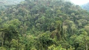 Misitu ya Bwindi iliyoko nchini Uganda