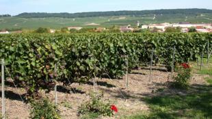 法国香槟地区