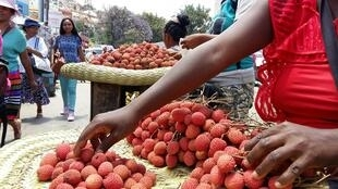 Sur les marchés de la capitale malgache, les premiers litchis viennent de faire leur apparition.