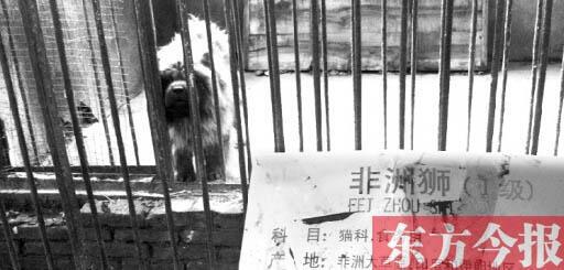 O cachorro apresentado como leão na China
