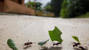 Sur un parcours de 14 mètres, l'engin semblable à une fourmi a été capable de revenir à son point de départ avec une précision d'un centimètre.