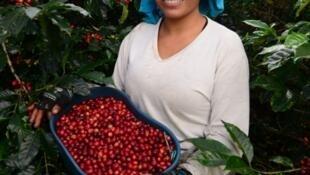Una mujer caficultura colombiana en el departamento del Cauca.