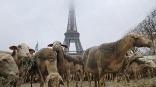 Sheep farmers protest in front of Eiffel Tower