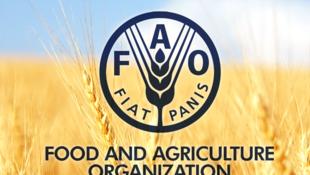 Shirika la Chakula la Kilimo FAO
