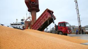资料图片:江苏南通某港口正在处理装运的进口豆类。摄于2018年4月4日