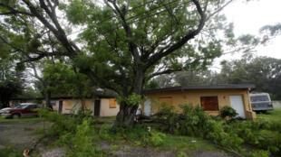 Des branches massives obstruent l'accès d'habitations à Tampa, le 11 septembre 2017