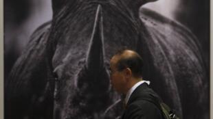 Un homme devant une photo de rhinocéros à la 16e Cites à Bangkok, le 3 mars 2013.