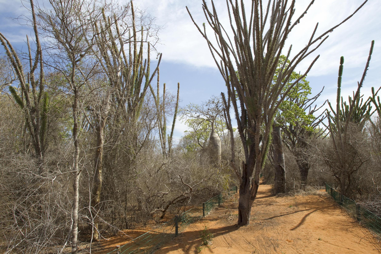 Mangily-Ifaty, Tortoise biotope, Tortoise, village Madagascar.