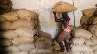 La Côte d'Ivoire compte environ un million de producteurs et le cacao y fait vivre, directement ou indirectement, entre un quart et un tiers de la population.