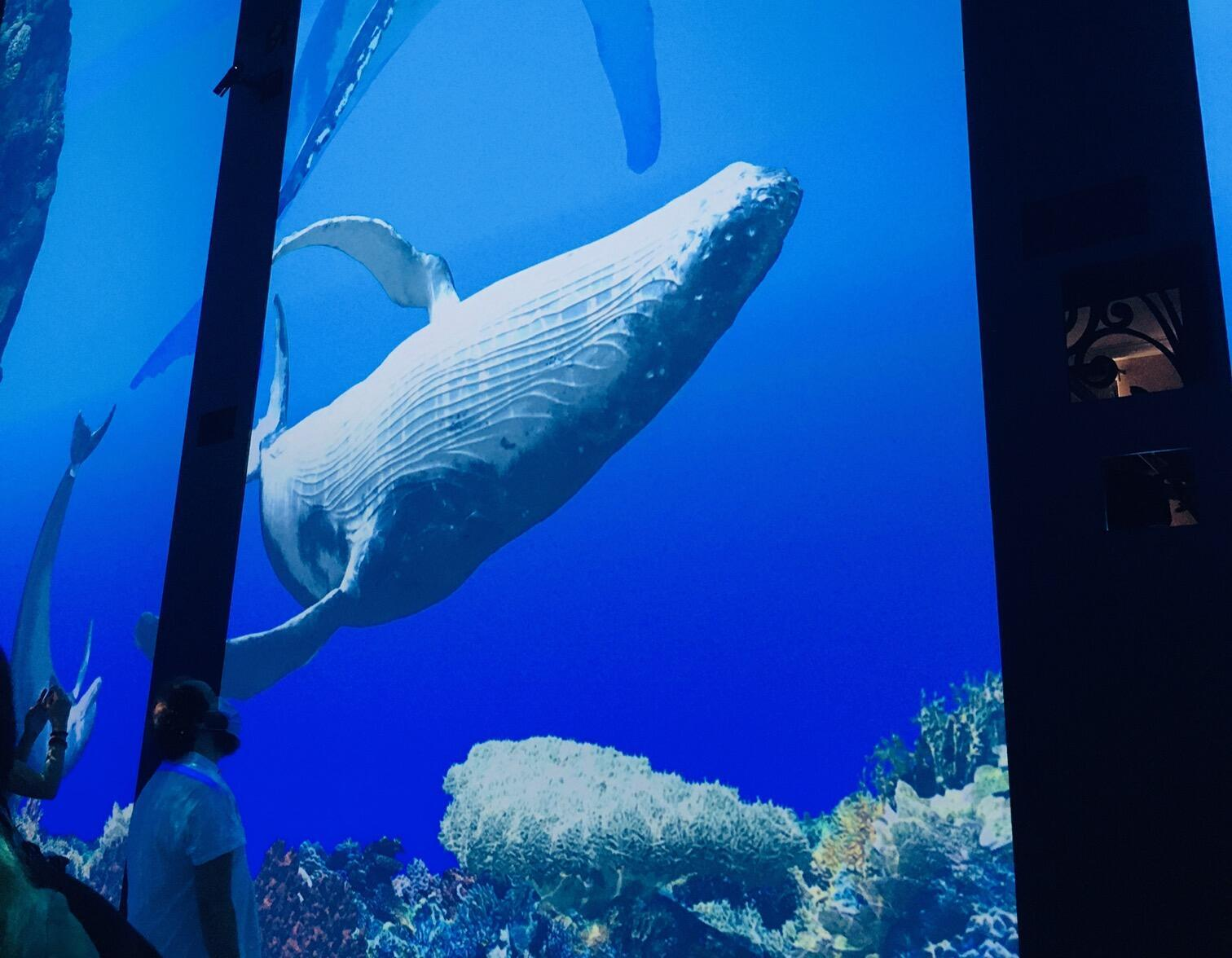 "3D humpback whales are among the star attractions of the ""Immersion"" exhibition at Monaco's Oceanographic Museum."