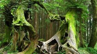 布列塔尼布罗塞瑞安(Brocéliande)森林