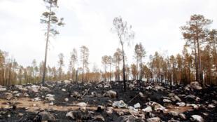 Une forêt brûlée par un incendie dans le nord-est de Ljusdal, au centre de la Suède, le 26 juillet 2018.