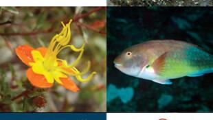 Novas espécies animais descobertas em 2011.