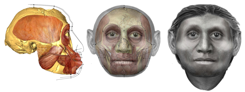 Interprétation artistique de la tête de l'homme de Florès qui vivait sur l'île indonésienne éponyme il y a 700 000 ans.