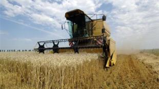 Un agriculteur moissonne son champ de blé, à Démouville (France).