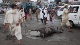 Residents walk past dead livestock after flood waters receded in Nowshera Pakistan