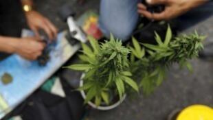 Imagen de archivo de una planta de marihuana.