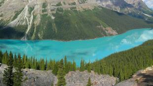 Le lac Peyto dans la province canadienne d'Alberta.