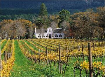Un domaine viticole dans la région du Cap en Afrique du sud.