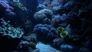 Fundo dos oceanos reservam descobertas científicas, mas exploração precisa ser melhor enquadrada.